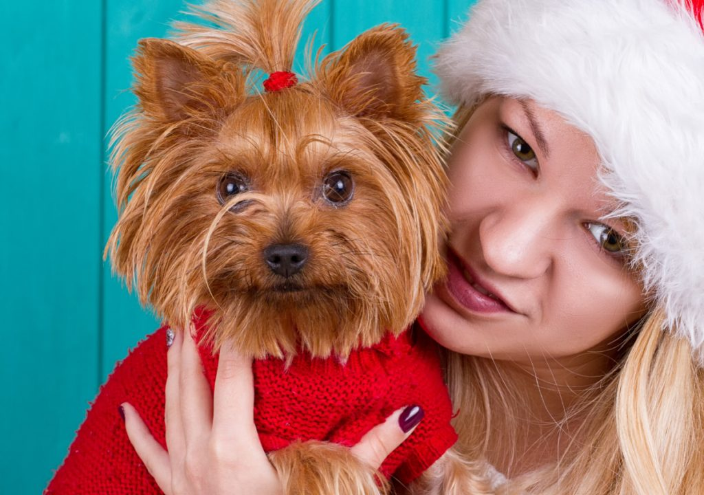 Girl in santa cap with red yorkie dog in red sweater