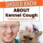 smiling male veterinarian holding Yorkshire Terrier dog