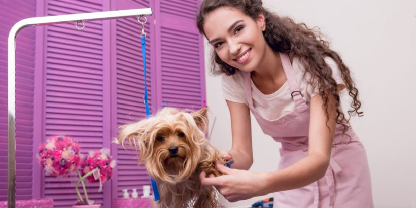 smiling female dog groomer grooming a Yorkshire Terrier
